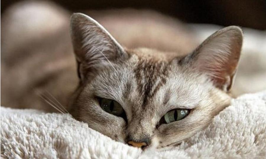 Pisica iti arata daca in casa ta e bunastare, pace si liniste