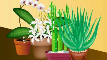 Zece plante care atrag energia...