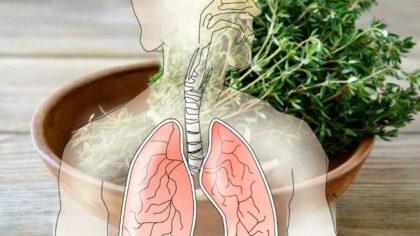 9 plante care curata plamanii...